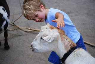 Owen pets the goat