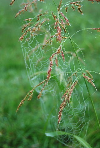 Grass with web