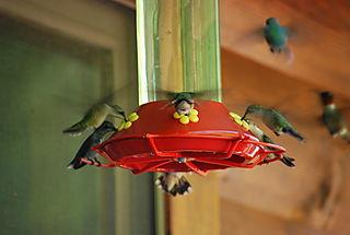 Full feeder