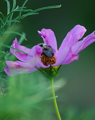 Purple wildflower and a bee