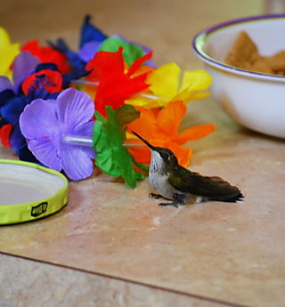 Hummingbird on the counter