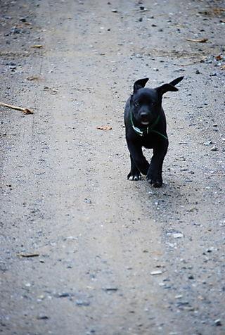 Molly dash
