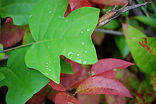 Green, red, raindrops