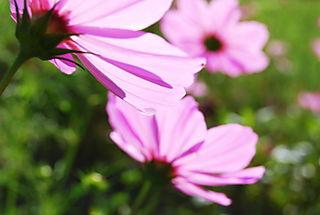 Purple wildflower mix