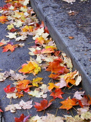 City street leaves