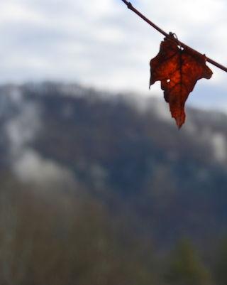 Leaf's view