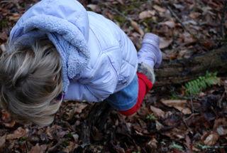 Climbing trees 2