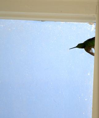 Hummingbird in the skylight