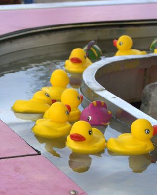 Pick-a-duck