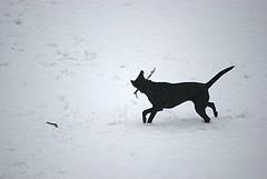 Molly the snow dog