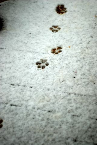 Doggy tracks