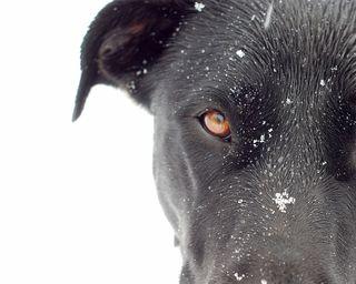 Snow dog Molly