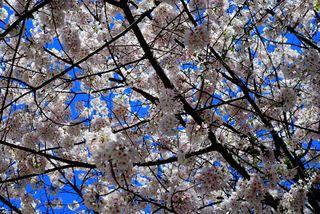 Blue skies and blooming things