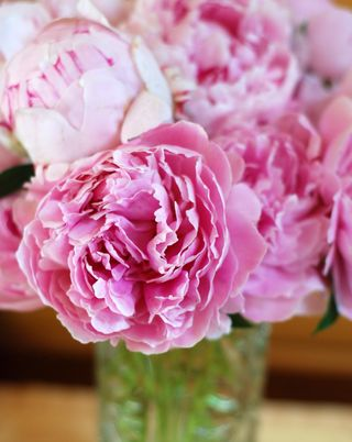 Pink Peonies in the sideboard