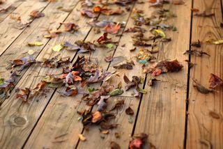 Crunch, morning. Lovely lovely fall.