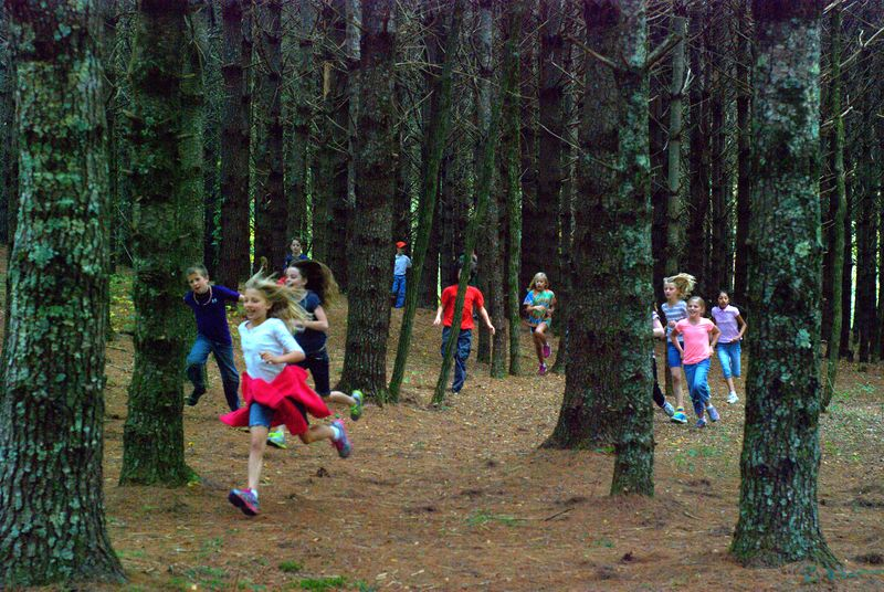 Recess among the trees