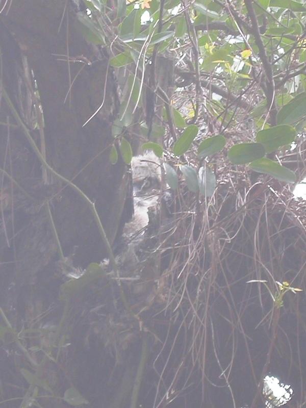 Owling3